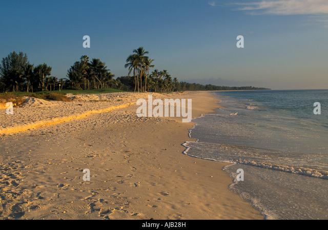 Captiva Island, Florida, deserted beach, sea shells,  Captiva Island, Florida, deserted beach, palm trees, sea shells, - Stock Image