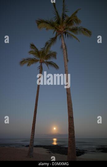 Moonset and palm trees. Hawaii, The Big Island. - Stock Image