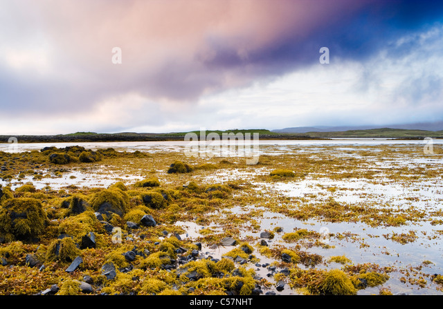 Seaweed on shore of Loch Dunvegan, Isle of Skye, Scotland,UK. - Stock Image