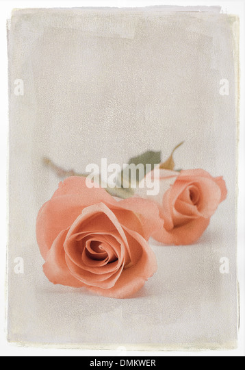 Two orange roses with textured overlay - Stock Image