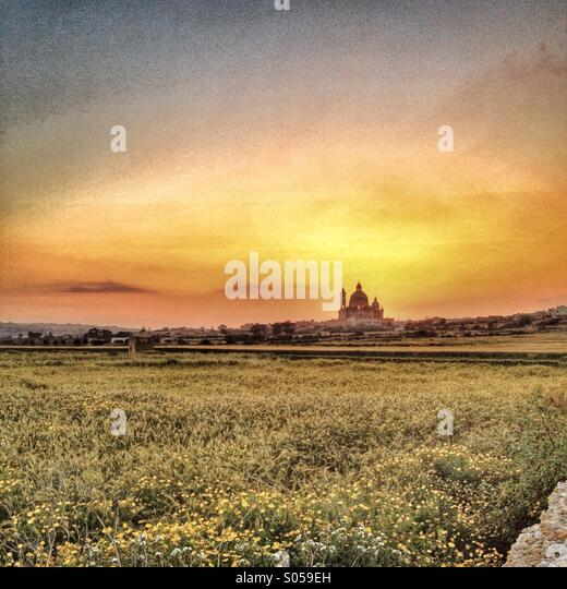 Looking across field of spring flowers at sunset. - Stock Image