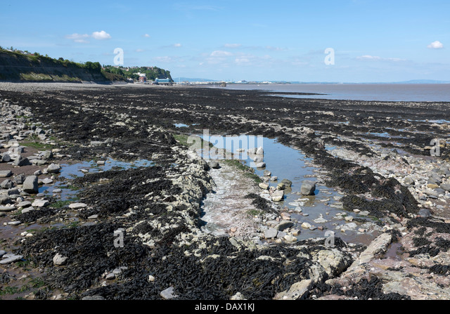 Seaweed on the foreshore at Penarth - Stock Image