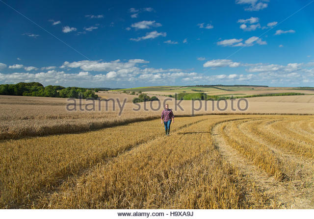 Young Farmer Walking Through Harvested Field - Stock Image