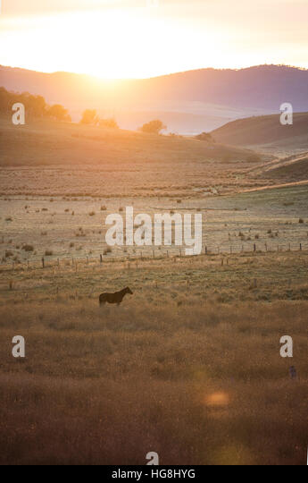 a horse alone in a field with hills and mountains during sunset sunrise with lens flare - Stock Image