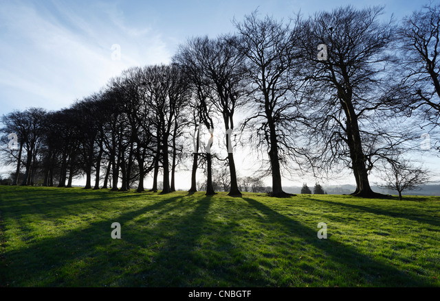 Spring Sunshine through Avenue of Trees at Cricket St Thomas. Somerset. England. UK. - Stock Image