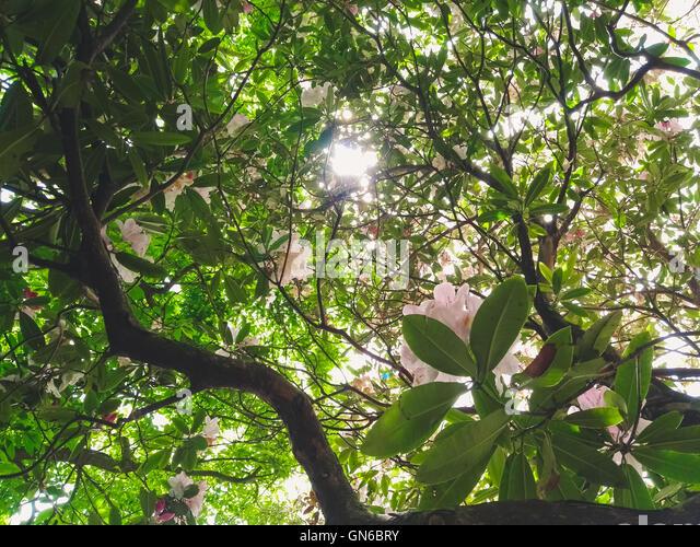 Bodnant garden plants