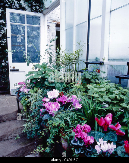 In the conservatory at Wallington in Northumberland, England - Stock Image