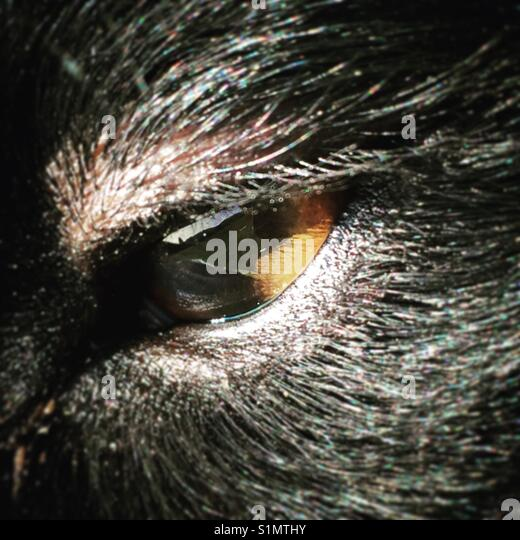 Dog eye close up - Stock Image