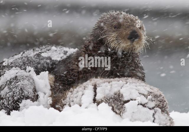snow winter seasons sea - photo #43