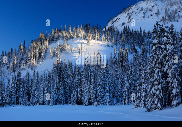Mount Rainier National Park becomes a winter wonderland in winter, with snow covered trees and trails for snowshoeing - Stock Image