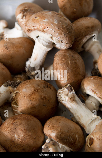 Heap of mushrooms - Stock Image