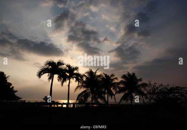 Indonesia, Banten, Silhouette of coconut trees - Stock Image