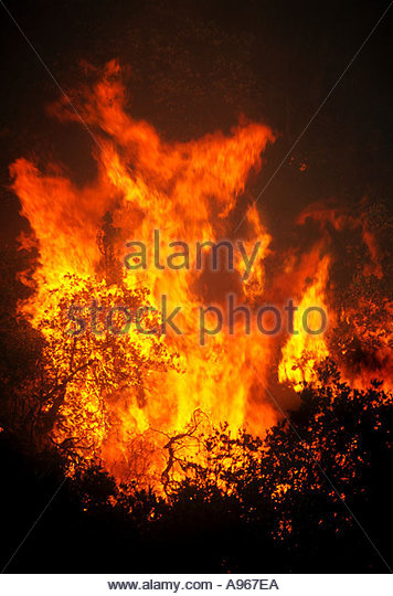 The Green Mountain Forest fire, closeup was started by a lightning strike  burning at 7500 feet,  Arizona - Stock Image
