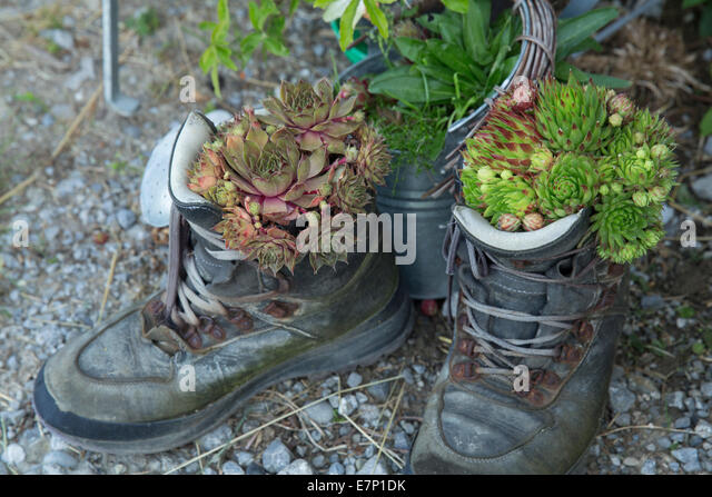 Shoes, traveling shoes, footpath, walking, hiking, flower, flowers, Switzerland, Europe, - Stock Image