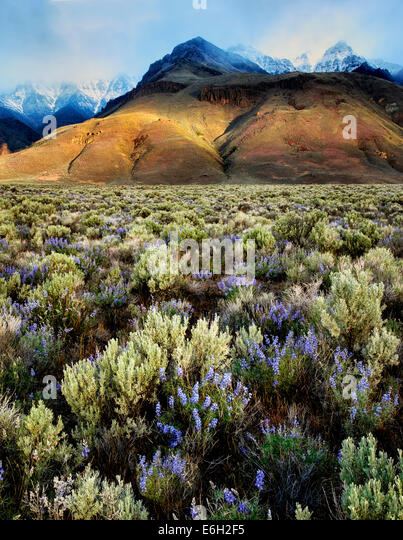 Sun peaking through on Steens Mountain with lupine wildflowers. Oregon - Stock-Bilder