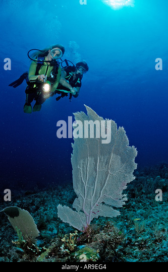 Scuba diving instructor and student Punta Cana Caribbean Sea Dominican Republic - Stock Image