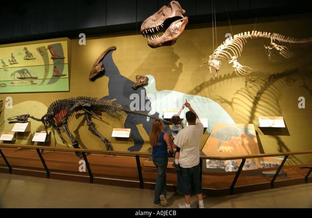 Cleveland Ohio University Circle Museum of Natural History dinosaur exhibit family - Stock Image