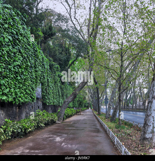 Pedestrian walkway between raw of trees and climber plants at Dolmabahce Street, Besiktas, istanbul, Turkey - Stock Image