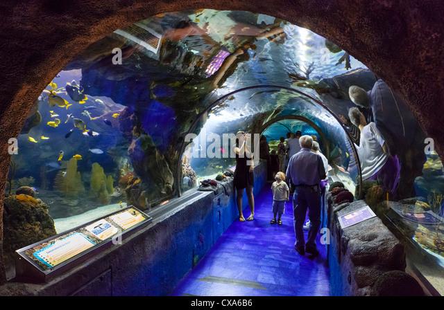 Sealife Aquarium Stock Photos Sealife Aquarium Stock