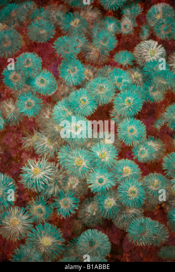 Abstract flower illustration - Stock Image