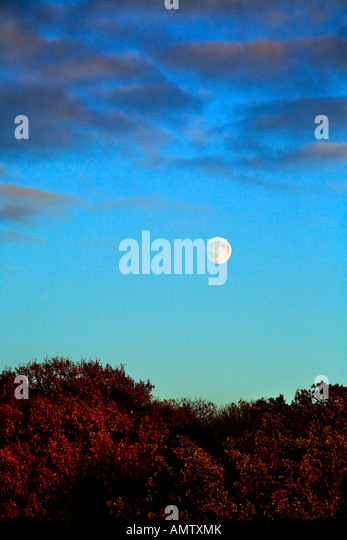A full moon is in the sky above trees lit by the evening setting sun. An Autumn scene in England - Stock Image