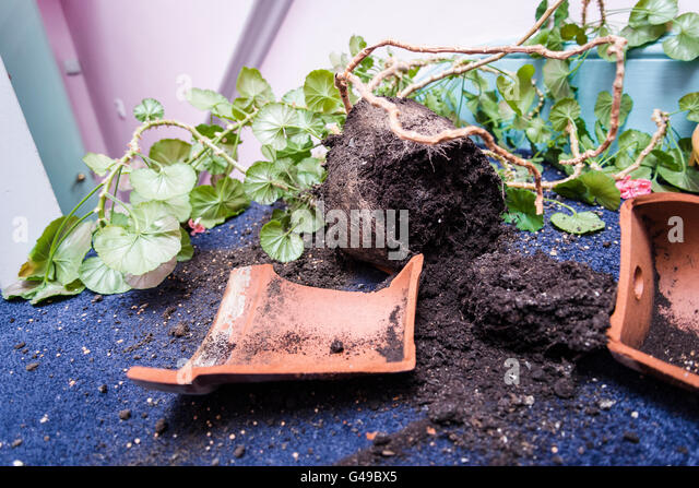 Broken Pot Plant Stock Photos & Broken Pot Plant Stock ...