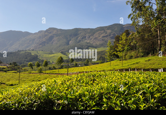 village scenery kerala stock photos amp village scenery