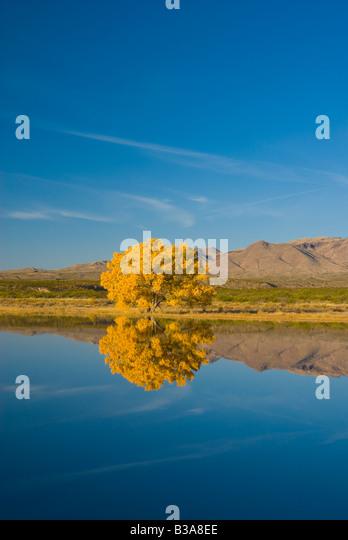 USA, New Mexico, Socorro, Bosque de Apache National Wildlife Refuge - Stock-Bilder