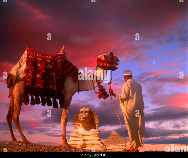 Camel ad driver with the Sphinx and Chephren Pyramid in distance, Giza, Cairo, Egypt. - Stock Image