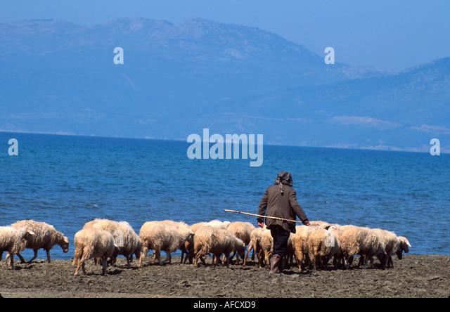Turkey Aegean Coast Pamucak Beach shepherd & flock - Stock Image