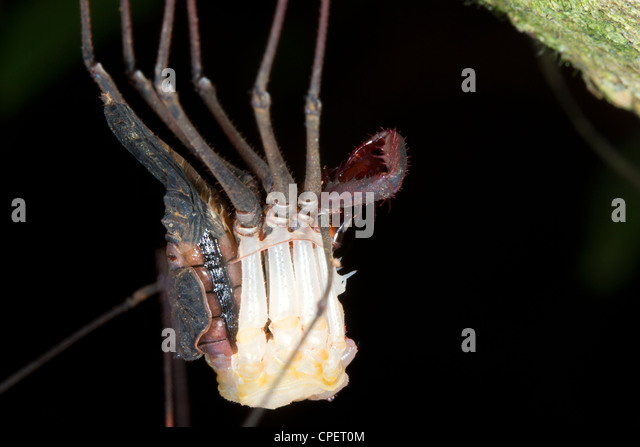 Spider skin stock photos spider skin stock images alamy for Skin it fish skinner