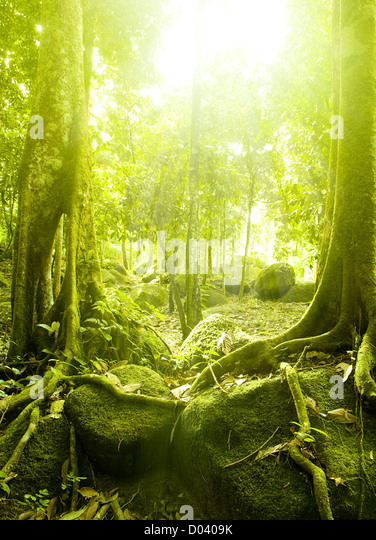 Green forest with ray of light - Stock Image