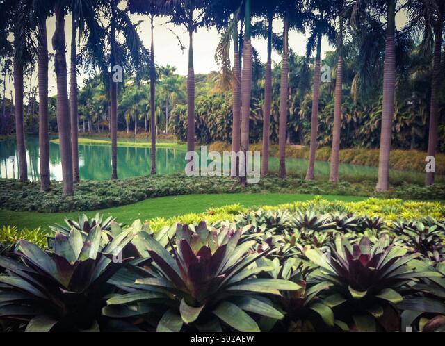 Brazil plants - Stock Image