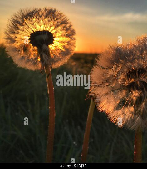 Sun through time - Stock Image