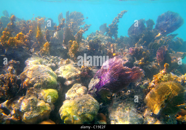 Caribbean tropical reef snorkeling in Mayan Riviera Mexico - Stock Image