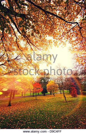 autumn glow - Stock Image