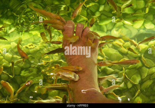 Ticklish feet stock photos ticklish feet stock images for Fish spa near me