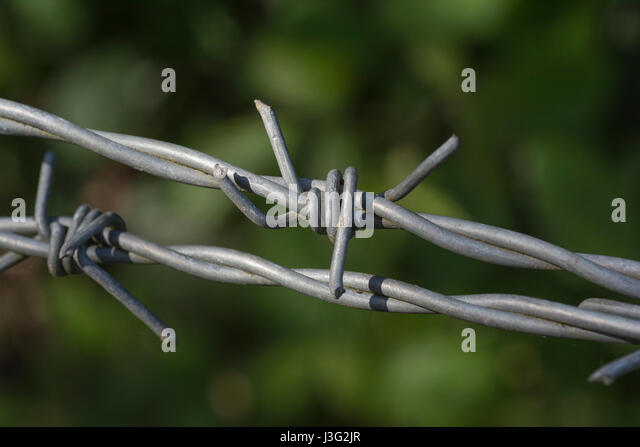 Close up shot of barbed wire. Metaphor for farming and also constraint, containment, and so on. - Stock Image