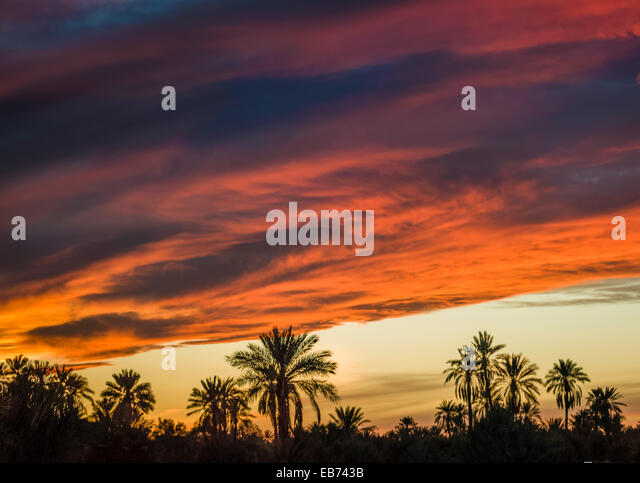 SUNSET TAFILALT PALM GROVE  RISSANI MOROCCO - Stock Image