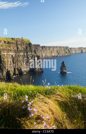 Summer Harebells beneath the Cliffs of Moher, the Burren, County Clare, Ireland. - Stock Image