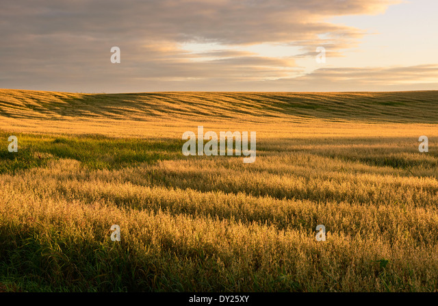 Field at sunset. - Stock Image