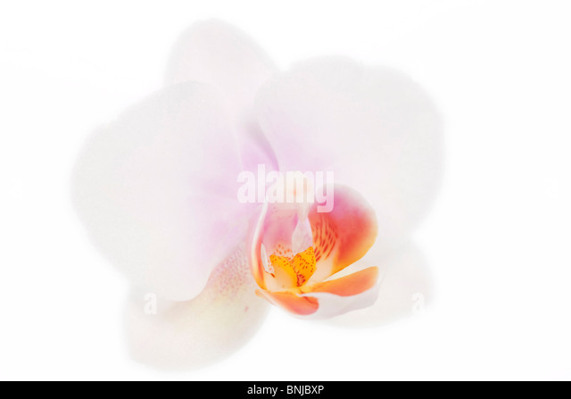 Arrangement Blooms Blossoms Bouquet Color Colourful Concept Bucket Flower Flowers Fresh Orchid White - Stock Image
