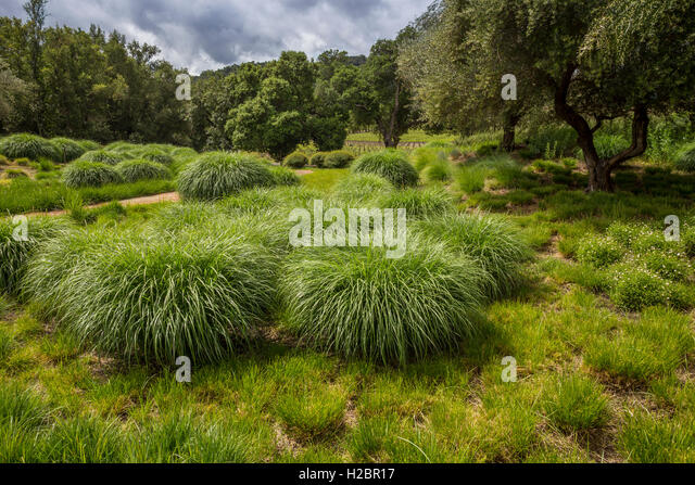 Drought tolerant plants stock photos drought tolerant for Wild grass gardens