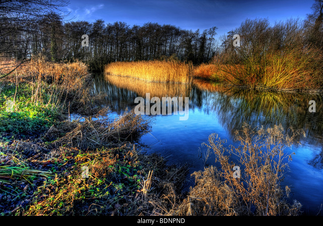 View up stream of the inlet to tonge mill pond with a reed bed in the foreground and clear blue sky as a backdrop - Stock Image