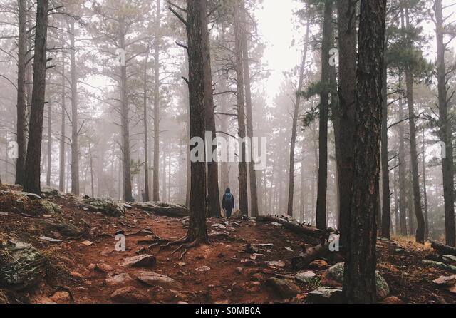 Foggy forest hike - Stock Image