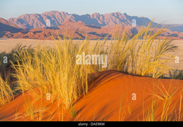 desert in Namibia, Namibia, Namib Naukluft National Park, Sossusvlei - Stock Image