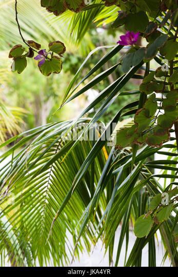 Bahamas Harbour Island Dunmore Town Stock Photos Amp Bahamas