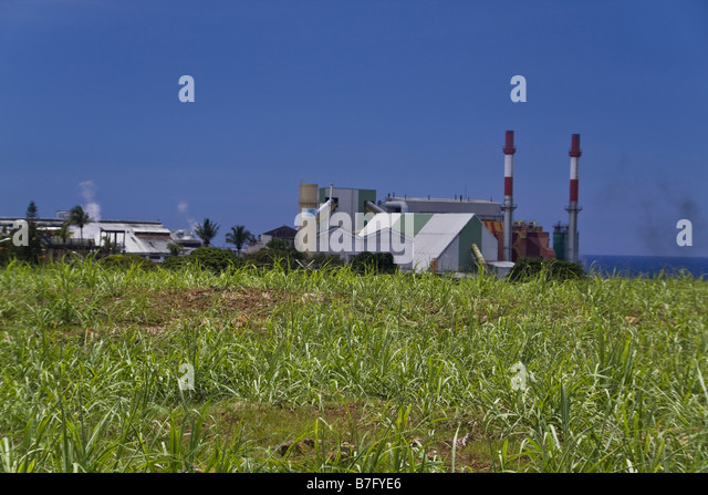 Sugar canefactory field with tower Mauritius Africa - Stock Image