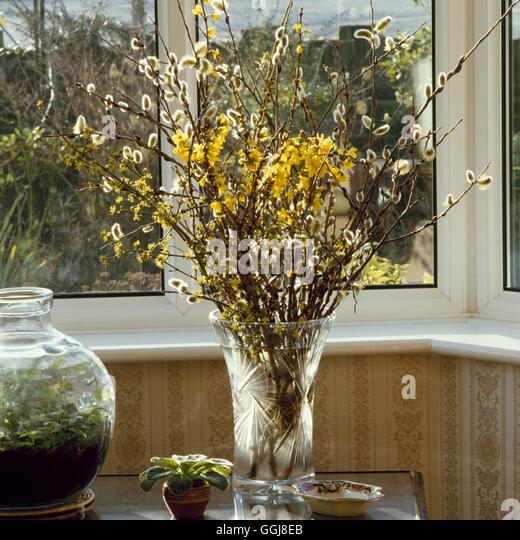 Flower Arrangement - Flowers `forced' in Winter - (Salix  Forsythia and Cornus)   FAR019516     Phot - Stock Image