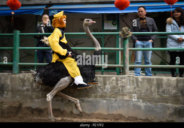 Fuzhou, China's Fujian Province. 4th Feb, 2016. A staff member of the Fuzhou National Forest Park performs with - Stock Image